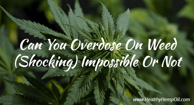 Can you overdose on Cannabis