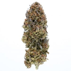 Buy Blackberry Kush Strain
