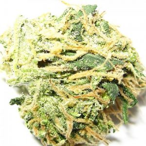 Buy Bubblegum Strain Weed
