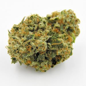 Buy Kosher Kush Strain